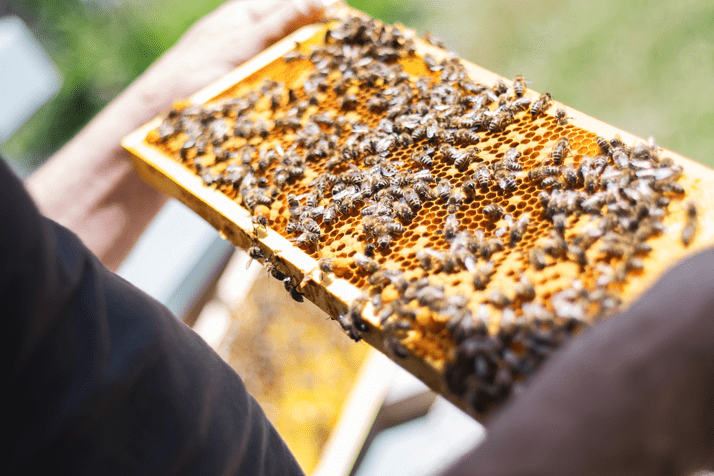 Beekeeping – Bosnia and Herzegovina