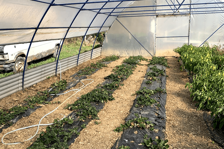 Greenhouse Production – Bosnia and Herzegovina